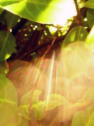 sunshine by blackrainbows11