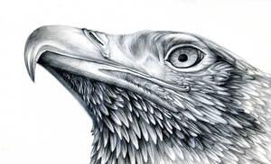 proud eagle by FeatheredDiva