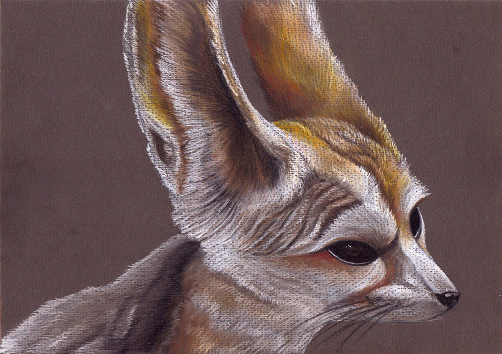 fennec fox by FeatheredDiva