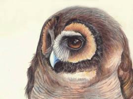 brown wood owl by FeatheredDiva
