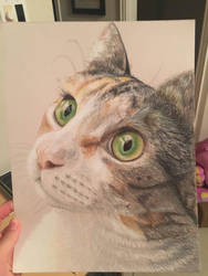Prisma color cat by addiehebert