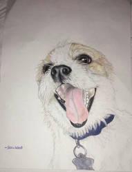 Prisma color dog by addiehebert