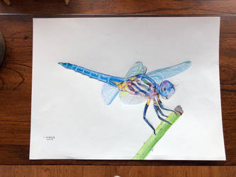 Prismacolor dragonfly by addiehebert