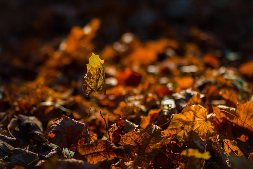 Autumn time by LucreciaMortishia