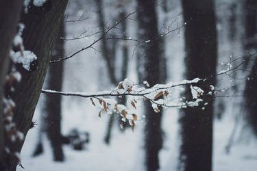 First Snow by LucreciaMortishia