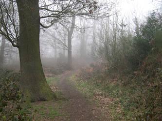 Foggy Trail 1 by stevesm-stock