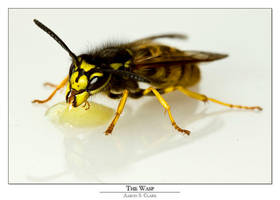 The Wasp by Argent47