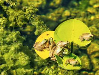 Frog School by BlackArrowPhotos