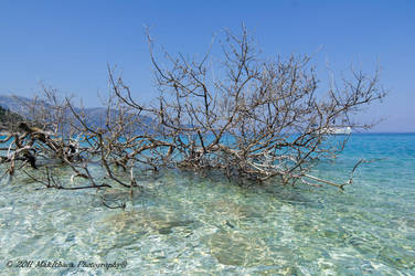 TREE ON THE SEA by makithaca