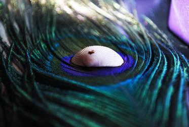 Peacock and Shell by enterfunnyusername