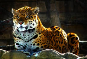 Jaguar - A Decent Pose ... 1 by m3-k3