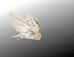 Barn Owl by Yosemite-Stories