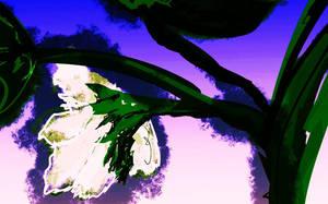 Cotton Flower Ex by Yosemite-Stories