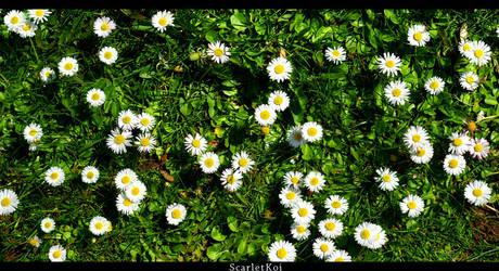 field of pretty weeds by ScarletKoi