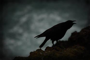 Raven by ScarletKoi