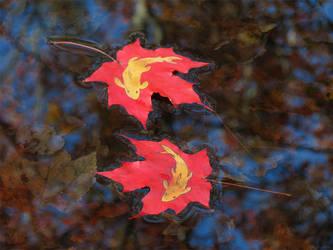 Autumn Koi by kaikaku