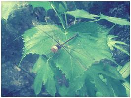 Libelula - Dragonfly by inzanita