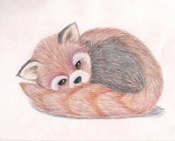 Red Panda by Bisoux