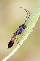 Sphecidae by SzymonMic