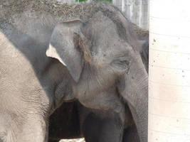 Happy Elephant by Elofan74