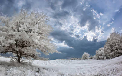 Crab Cloud - Infrared Trees by Archangelical