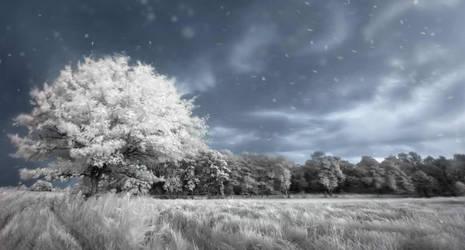 Hoarfrost Wonderland - Infrared Tree by Archangelical