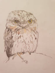 Tawny Frogmouth request by goldenug
