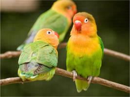 lovebird 4 by Constant-Wegman