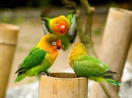lovebirds 5 by Constant-Wegman
