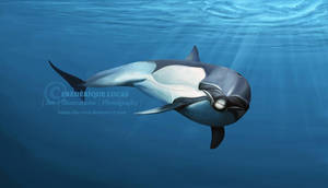Liberation - Common dolphin by namu-the-orca