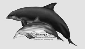 The giant dolphins of Scotland by namu-the-orca