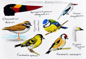 Some birds in watercolour by namu-the-orca