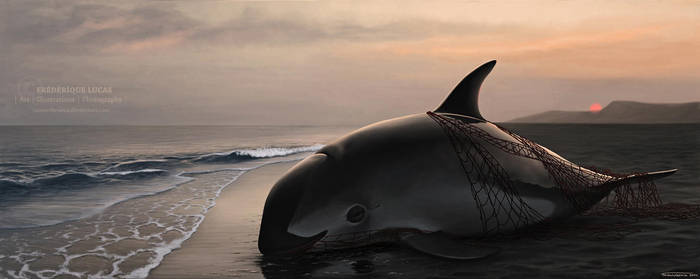 Despedida Vaquita ( 'Goodbye Vaquita' ) by namu-the-orca