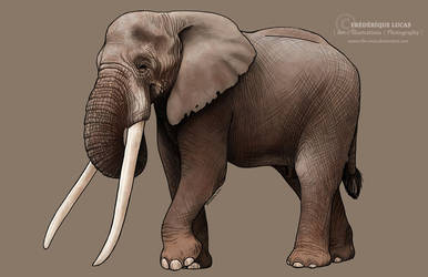 African bush elephant - a story about poaching by namu-the-orca