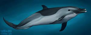 Sharp beak by namu-the-orca