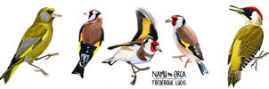 Watercolour bird studies by namu-the-orca
