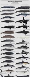 Marine Life of the Maritime Provinces by namu-the-orca