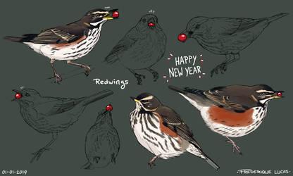 Redwing studies by namu-the-orca