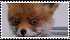 Stoned Fox Stamp by Pyroglifix