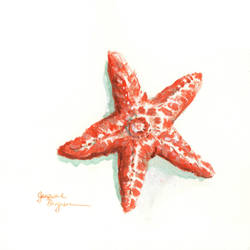 Starfish by CaptainPharos