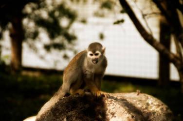 singe ecureuil by KIKIphotolove