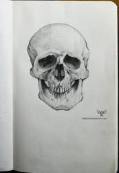 Study: Skull by DM7