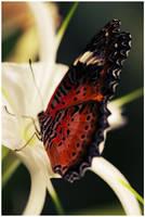 Hi Butterfly by twistedelegance