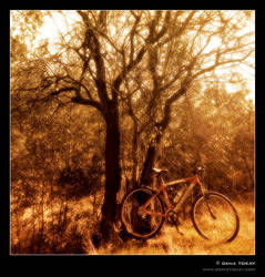 Bicycle in Eymir by denizt