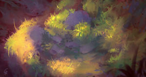 Rock and grass study + Video process by RobertoGatto