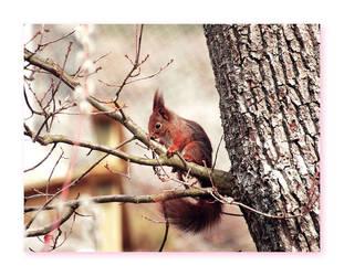 squirrel by Cirkusmaskinen