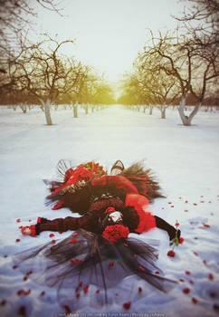 Asagi 7th Rose Winter 2 by KuroiAsahi
