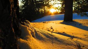 Winter's Light by shaynaJreddick