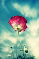 Spring II by xmarvel