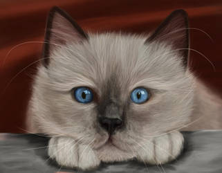 Ragdoll Cat by TheCookieAnnie